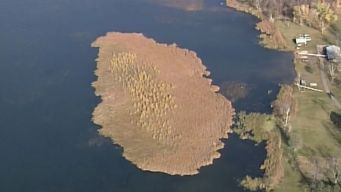 'Monster' Bog Wreaks Havoc on Minnesota Lake