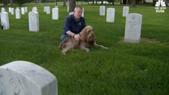 Bugler and His Dog Honor Veterans