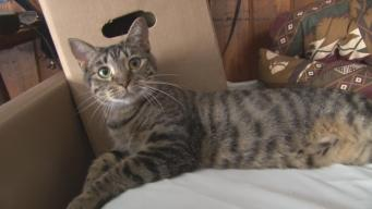 Shelter Cat Saves New Owner From Snake