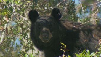 Real Bears Visit 'Teddy Bear Child Care'