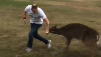Deer Attacks Oklahoma Pastor