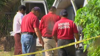 Shelter Volunteer Found Dead After Reporting Dog Bite