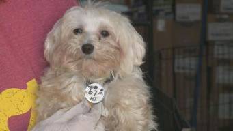 Dog Disease Contagious to Humans Confirmed in Iowa