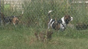 City Enforces Two Dog Limit