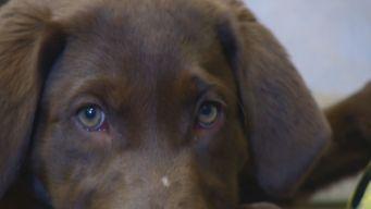 New Police Dogs Trained to Ignore Marijuana