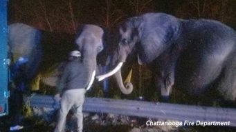 Elephants Escape Truck Fire