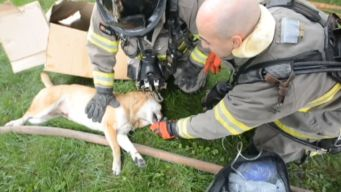Firefighters Save Man's Best Friend