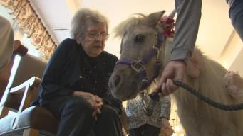 Mini-Horses and Donkeys Bring Smiles to Residents of Care Facility