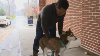 Maryland Dog Reunited with Family After Found in Florida