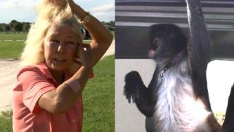 Monkey Attacks Home Depot Worker