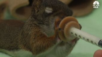 Minnesota Center Helps Baby Animals