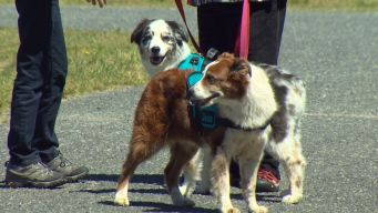 Specially Trained Dogs May Help Fight Against Parkinson's