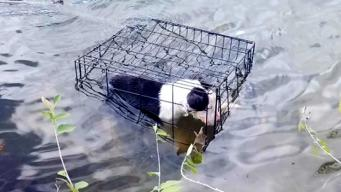 Man Rescues Dog Floating in Crate