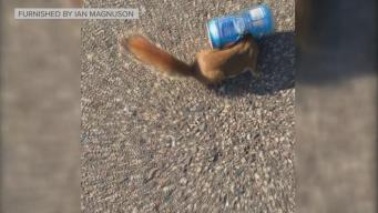 12-Year-Old Rescues Squirrel
