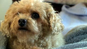 Heroic Dog Saves Owner