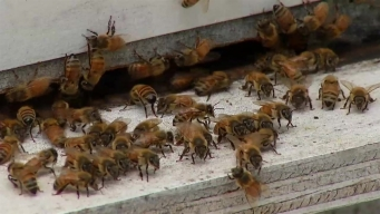 Omni Dallas Hotel Adds Rooftop Beehives