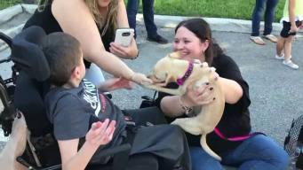 Puerto Rico Pet Owners Reunited With Animals