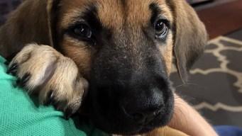 Pet of the Week: Justin