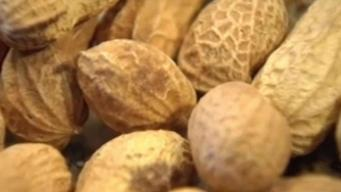 Scientists May Have Found Peanut Allergy Cure
