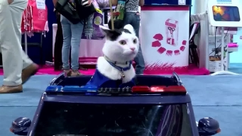 Police Cat Patrols Trade Show