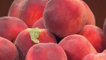 Good News for Central Texas Peach Crop