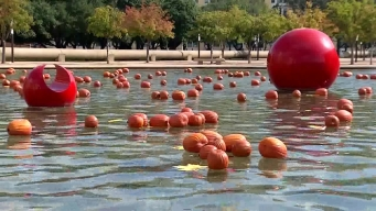 Dallas City Hall Gets Floating Pumpkin Makeover
