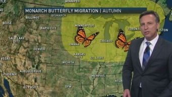 Cold Fronts Help Butterflies Migrate Through North Texas