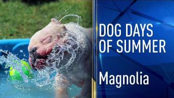 Dog Days of Summer - July 31, 2017