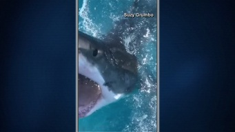 Shark Devours Bait Bag: Caught on Camera