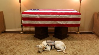 Bush's Service Dog to Assist Wounded Soldiers