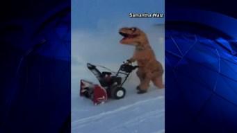 T-Rex Caught on Camera Snow Plowing