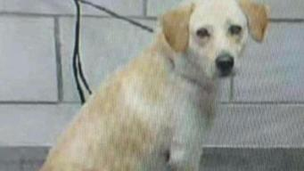 Dallas is Open to Sparing 'Lamb of God' Dog Sentenced to Death