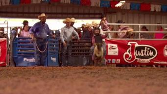 Texas Connects Us: Mutton Busting Gets Down and Dirty