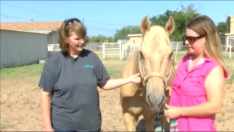 Therapy Horse Retires