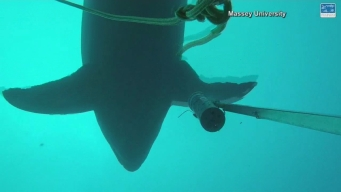 Video Shows Shark Play With Survey Equipment