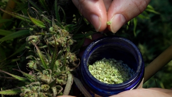 Mayors of 7 US Cities Where Marijuana Is Legal Form Group
