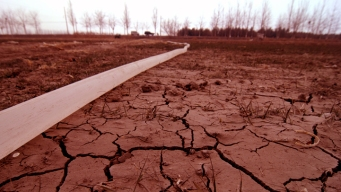 Estimated 500M Trees Killed in Drought