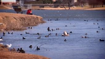 Fines rejected  for Feeding Birds Near Love Field