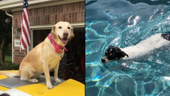 Dog Days of Summer -  Blondie & Reuben