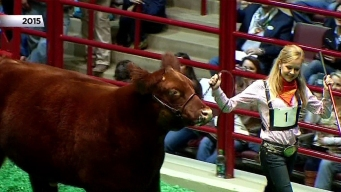 Hundreds Line Up for Stock Show 'Move In'