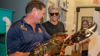 Giant Lobster Named After Bon Jovi