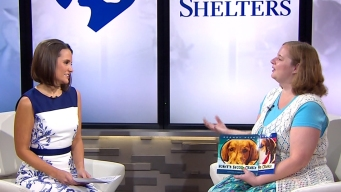 Author Helps 'Clear the Shelters' With Books