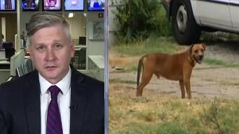 The DMN's Rudy Bush: Dog Attack Aftermath