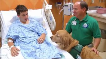Caring Canines Help Patients in Plano