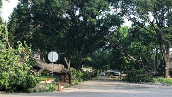 Dallas Sanitation Will Pick-Up Brush, Storm Debris