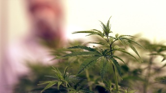 Poll Suggests Texans Support Legalizing a Little Weed