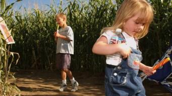 Texas Thunder Truck Corn Maze