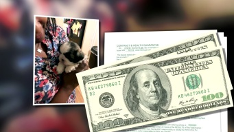Dallas Woman Accused of Running 'Puppy Scheme' in Apartment