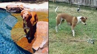 Dog Days of Summer - Nemo & Dottie