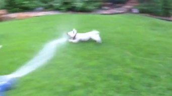 Molly and the Sprinkler